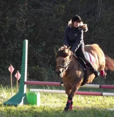 free adoption of my 7 year pony fjord