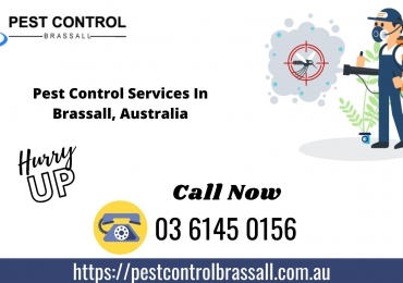 Top Pest Control in Brassall